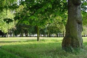 На проспекте Науки строится новый парк