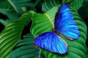 На Крестовский остров налетели бабочки