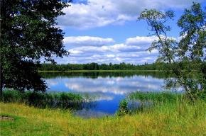 Вода в Зеленохолмском озере, где погибла рыба, не токсична