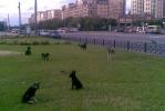 Фоторепортаж: «Стая собак у «Прибалтийской»: надо что-то делать!»
