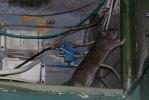 Кошмар четвертого подъезда: крыс больше, чем людей: Фоторепортаж