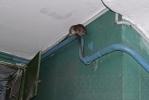 Фоторепортаж: «Кошмар четвертого подъезда: крыс больше, чем людей»