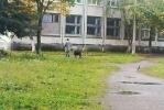 Собаки на школьном дворе делают свои дела: Фоторепортаж