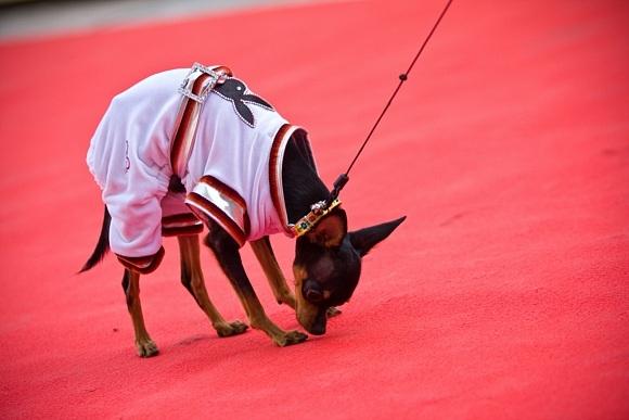 На собачьем конкурсе красоты победила Лили: Фото