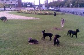Стая собак у «Прибалтийской»: надо что-то делать!