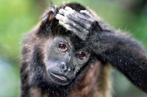 Защитим животных от «фотографов» - эксплуататоров!
