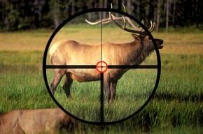 В Ленобласти начинается сезон охоты на лосей