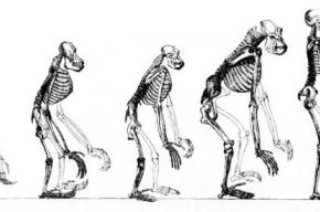 Человек продолжает эволюционировать