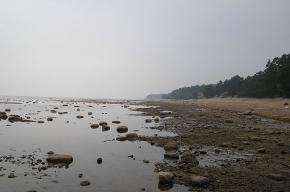 «Гринпис» устраивает уборку на Финском заливе