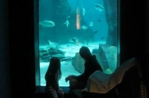 Чему учат детей в зоопарке и океанариуме