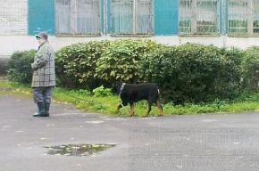 Собаки на школьном дворе делают свои дела