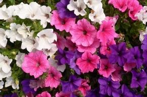 В Петербурге открывается садоводческая выставка «Осенняя флора»