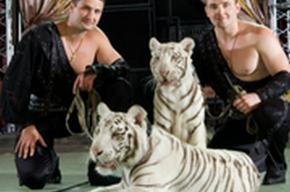 Братья Запашные дрессируют тигров под дождем