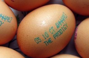 Яйца подскажут, как потратить деньги