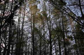 В Петербурге открылся лесной саммит
