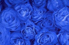 Голубые розы – невозможное возможно