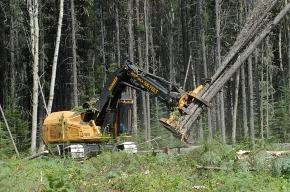 Экологи хотят поднять проблему незаконных вырубок леса