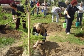 В Приморском районе высадят деревья