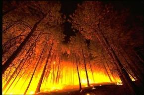 В Пушкинском районе – крупный пожар