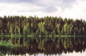 В Петербурге пройдет «Лесной саммит»