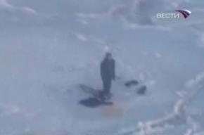 Подросток дрейфовал на льдине с белыми медведями