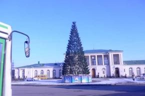 В Пушкинском районе начали установку елок
