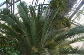 Пальмовую оранжерею не закроют