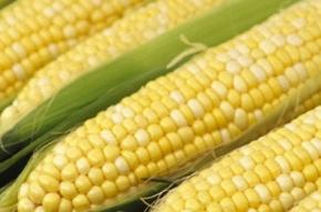 Американскую кукурузу забраковали