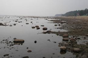 Финский залив сегодня разминировать не будут