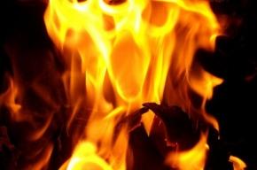 В доме на Ропшинской улице сгорел лифт