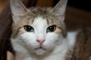 В Лофт Проекте «Этажи» раздадут бездомных кошек и собак