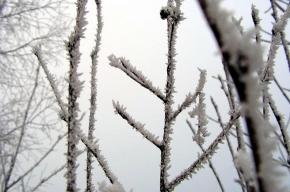 В Москве аномально холодная погода, а в Петербурге еще похолодает