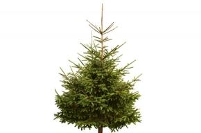 Одень елку