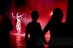 Четыре дня в Петербурге кипели «животные» страсти: Фоторепортаж