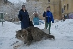 Фоторепортаж: «Петербургским дворникам еле хватает сил»