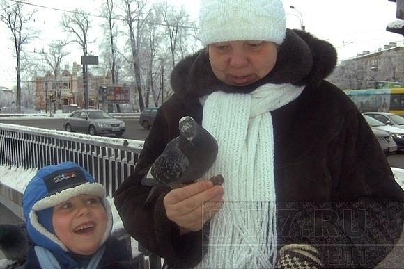На Черной речке замерзают утки: Фото