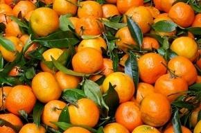 Перед Новым годом Петербург лишили 2400 тонн мандарин