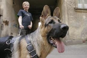 Собака сделала свое дело в «Пулково»