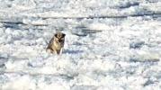Польская дворняжка проплыла на льдине полторы сотни километров: Фоторепортаж