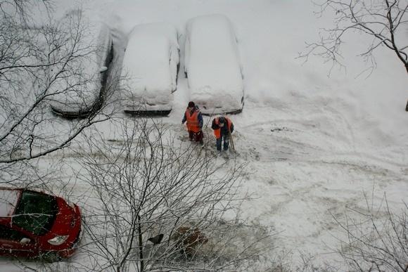 Зачем дворники едят снег?: Фото