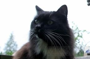 Кот предсказывает смерти людей