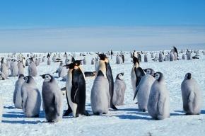 Во льдах Антарктиды нашли пять ящиков виски