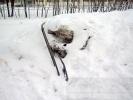 Жителей микрорайона на Дальневосточном раздражают горы снега, мусор и самосвалы: Фоторепортаж