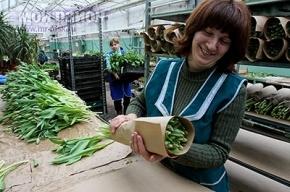 К 8 Марта в Москве вырастили восемь миллионов тюльпанов
