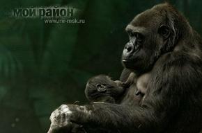 Кто родился в зоопарке