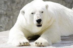 Из зоопарка уехал белый медведь