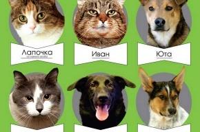 Бездомные кошки и собаки найдут своих хозяев в «Этажах»