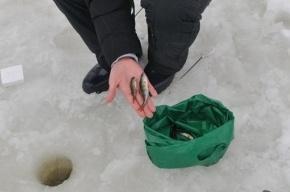 Со льда Финского залива спасли 62 человека