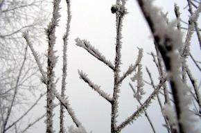 На Петербург надвигается мороз. МЧС предупреждает об опасности