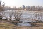 На озере в Петровском парке массово гибнет рыба: Фоторепортаж